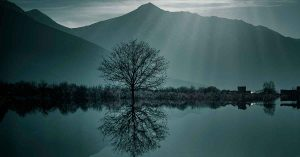 Background photo of a serene mountain landscape with a large bare tree reflected on the surface of a lake.